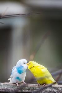 320x480 Love Birds 4k