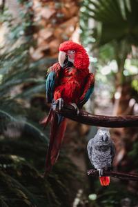 480x800 Macaw 4k