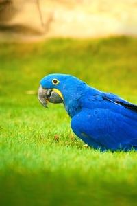 640x1136 Macaw Bird 4k
