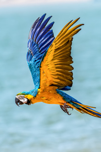 480x800 Macaw Bird 5k