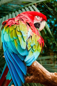 Macaw Colorful Bird 4k