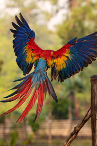 Macaw Flight Feathers