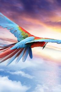Macaw Jounrey 4k