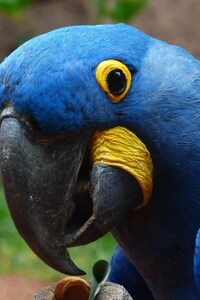 480x800 Macaw Parrot 2