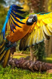 480x854 Macaw Parrot 5k