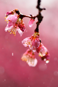 240x320 Macro Blossom Flowers Dews 4k