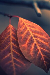 1242x2688 Macro Leaf Photography