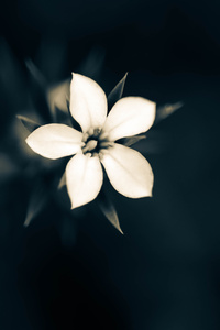Macro White Flower Plant