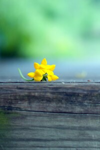 480x800 Macro Yellow Flower Blur