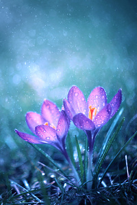 1280x2120 Magical Flower Morning