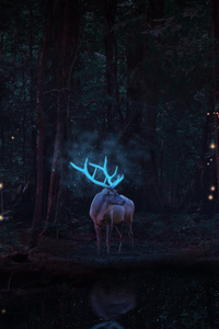 540x960 Magical Reindeer In Forest