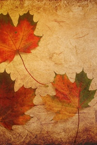 2160x3840 Maple Leaves Texture Background