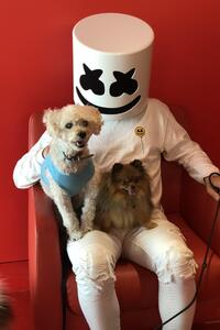 480x800 Marshmello With Dog