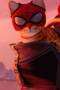 Marvels Spiderman Miles Morales 2021 Cat
