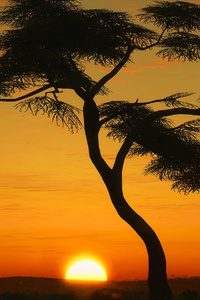 480x800 Masai Mara Sunrise