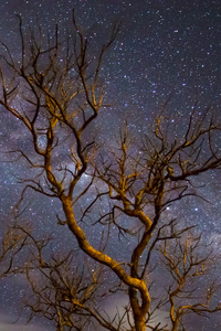 1280x2120 Milky Way Galaxy Tree Dark 4k