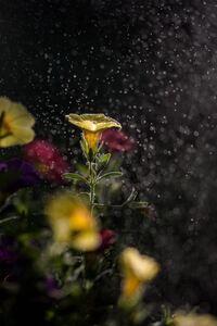 Mist Flowers