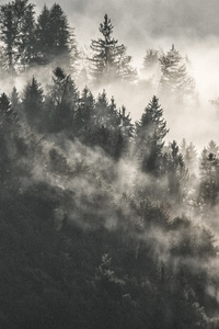 1125x2436 Mist Winter Trees In Mountains 5k