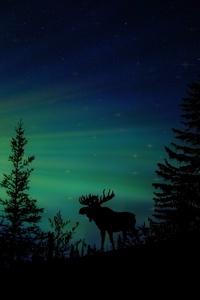 Moose Forest Animal Dawn Silhouette Aurora