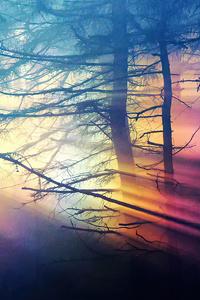 Morning Sunbeams Forest 4k