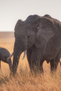 640x1136 Mother Baby Elephant 4k