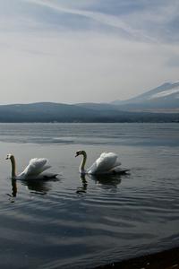 Mount Fuji Landscape View Ducks 5k