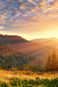 1242x2688 Mountain Scenery Morning Sun Rays 4k