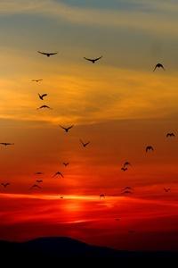 1080x2280 Mountains Birds Silhouette Sunset Dusk Dawn 5k