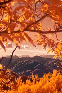 Mountains View Between Autumn Tree Branches 5k
