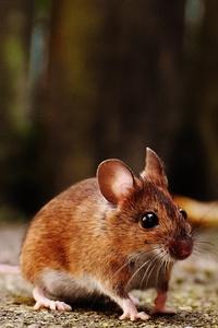 Mouse 4k