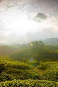 Munnar Hills India