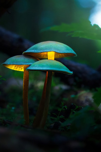 Mushroom Plants Glowing 4k