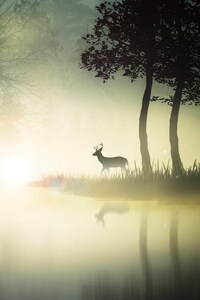 480x854 Mystic Forest