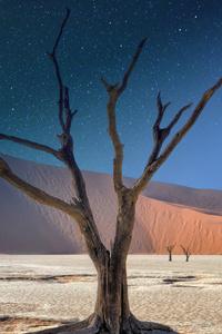 1440x2560 Namibia Deadvlei Panorama 5k