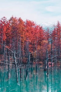 Nature Landscape Trees Forest Fall Water Pond Sky Clouds 4k