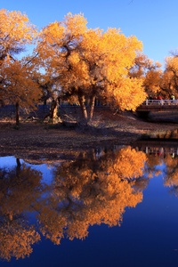 Nature Waters Autumn Trees Reflection In Water