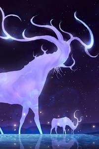 480x800 Night Deer