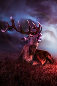 Night Sky Deer Fantasy 8k