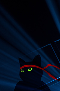 Ninja Cat 4k