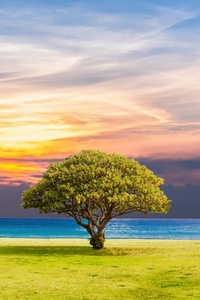 Ocean Summer Tree Landscape 5k
