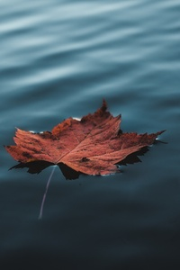 Orange Autumn Leaf Floating On Water