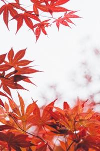 320x480 Orange Leaf Tree 5k