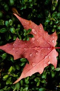 1080x1920 Orange Leaf Water Drops Macro 5k