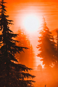 480x854 Orange Sunrise Between Trees 4k