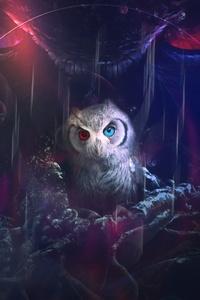320x480 Owl 8k