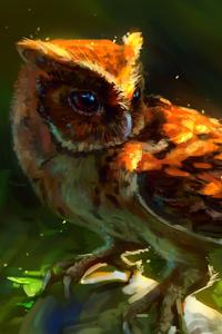 Owl Arts