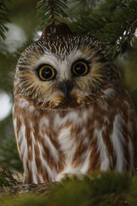 480x800 Owl Bird
