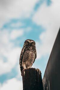 800x1280 Owl Bird 4k