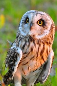 240x320 Owl Bird Predator
