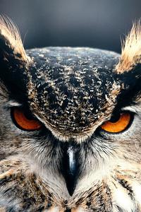 480x854 Owl Closeup 4k